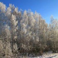 В зимнем наряде. :: Михаил Попов