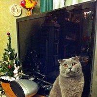 Что.  опять шапку новогоднюю одевать будете? :: Виталий Селиванов