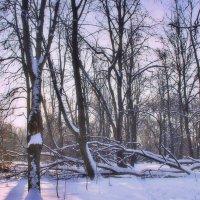Зима в Кусковов :: Наталья Лакомова