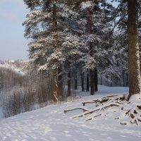 Токсовские холмы. :: Юля Елисеева