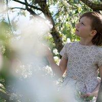 Яблоневый цвет :: Анастасия Агафонова