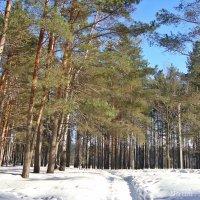 Много,много снега навалило :: Лидия (naum.lidiya)