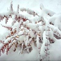 Выпал снег! :: Владимир Шошин