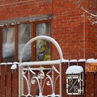 Бросайте в ящик письма, во дворе только добрая собачка! :: Татьяна Помогалова
