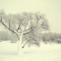 волшебная зима :: Татьяна