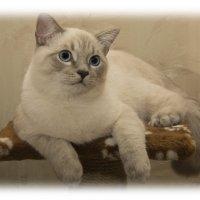 Тимка (5,5 месяца) :: Виктор (Victor)