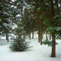 Как в лесу! :: Надежда