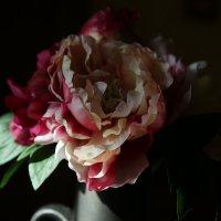 Роза :: Максим Тураев