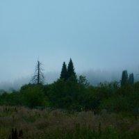 осенний туман :: vladimir polovnikov