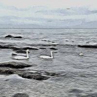 Лебеди на Каспии :: Анатолий Чикчирный