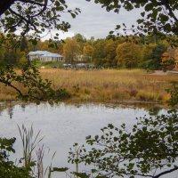 Осенний праздник в парке Монрепо. :: Лариса (Phinikia) Двойникова