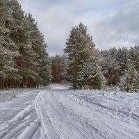 В зимнем лесу. :: Елена Струкова