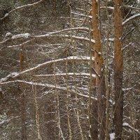 Зимний лес :: Вера Сафонова