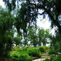 В зелени реки :: Роман Захватошин