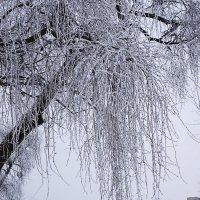 В зимнем парке :: Маргарита Батырева