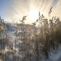 Солнечный удар :: Владимир Шамота