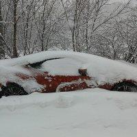 SOS ! Мы погребены под снегом !!!  ТУТАТИ нет никого кто бы нас откопал !!! :: Наталья Денисова