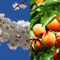Скоро будет весна....и лето  )) :: yusuf alili