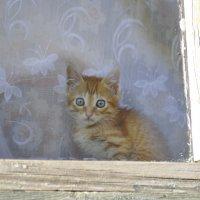 Взгляд из окна :: Александр Шарапов