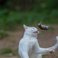 Кошки мышки 2 :: Александр Шарапов