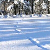 Следы на снегу. :: Иван