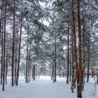 зимний лес :: Елена Кордумова