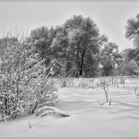 Зима берёт своё :: Андрей Дворников