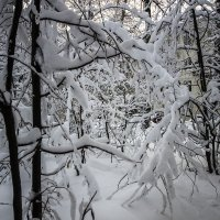 Как зимой :: Виктор Х.
