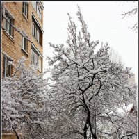 Зима... :: Михаил Розенберг