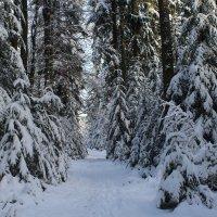 Прекрасный зимний день :: Mariya laimite