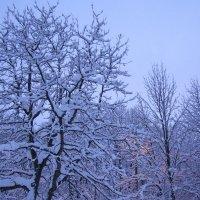 Снежное фото в сумерках :: Анна Воробьева