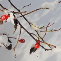Ягоды на снегу :: Виктор
