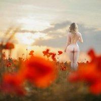 Времена года(Лето) :: irina Schwarzer