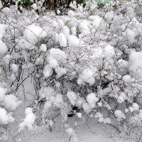 Украшение для снежноягодника. :: Лия ☼