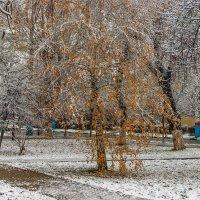 Мокрый снег :: Игорь Сикорский
