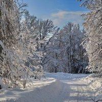 В зимнем парке .. :: Алексей Михалев