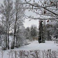 Зимний парк. :: ТАТЬЯНА (tatik)