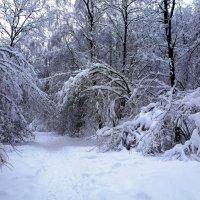 После снегопада 1 :: ES