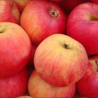Запорожские яблоки :: Нина Корешкова