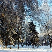 Зимний лес :: раиса Орловская