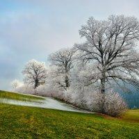 у леса на опушке, жила зима... :: Elena Wymann