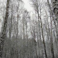 Зимушка - зима :: Татьяна Котельникова