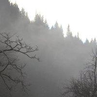 В утреннем облаке :: Светлана Попова