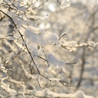 Зима,мороз,красота! :: ninell nikitina