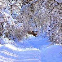 Снегу валом навалило, всё вокруг преобразило. :: Татьяна Помогалова