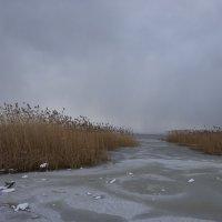 Берег залива в феврале. :: галина