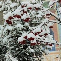 Снегопад. :: венера чуйкова