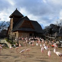 Фламинго :: Катерина Клаура