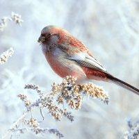На зимнем лугу :: Влад