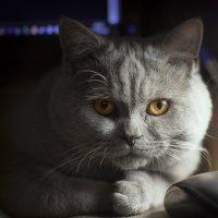 Давно не было котиков :) :: Дима Хессе
